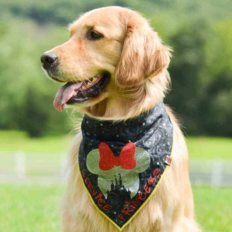 Magical Dog Bandana