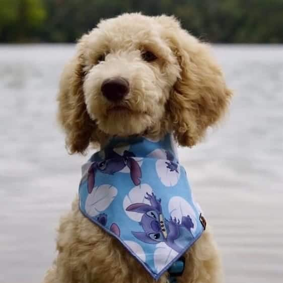 Stitch Dog Bandana