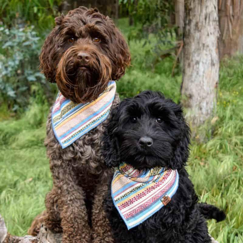 Oaxaca Dog Bandana