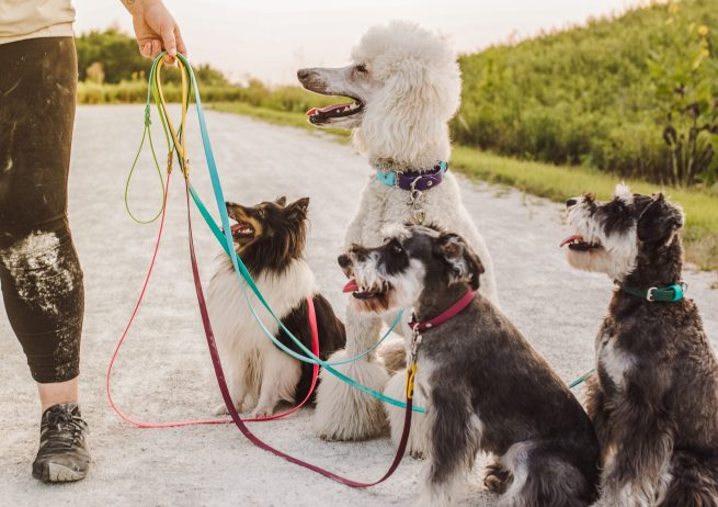 Dogs with waterproof biothane standard leashes