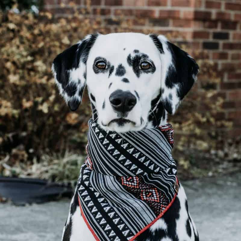 Chichén Itzá Dog Bandana