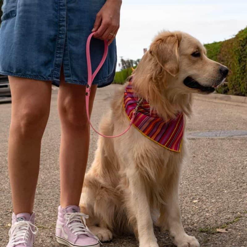Standard Dog Leash (2′-6′)
