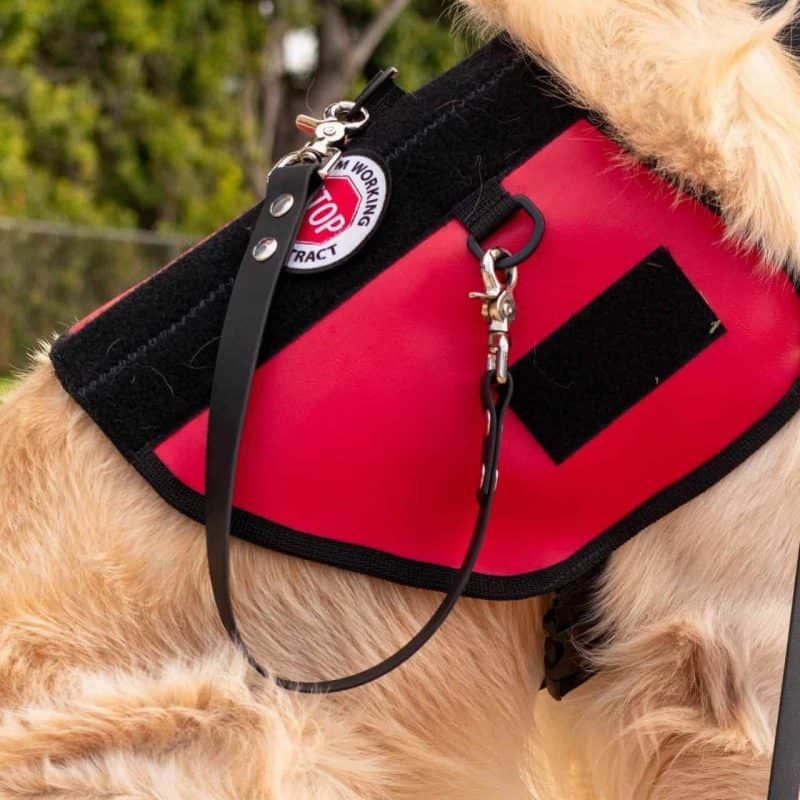 Service Dog Pull Strap