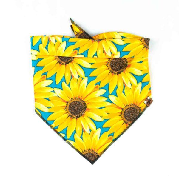 Bright yellow sunflower and blue dog bandana