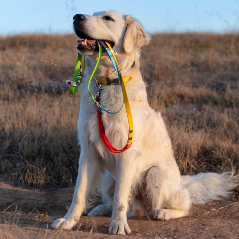 Rainbow Hands-Free Dog Leash
