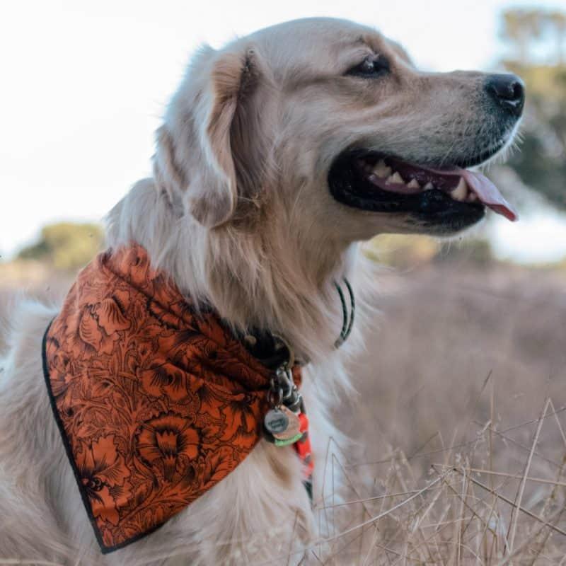 Saffron Floral Dog Bandana