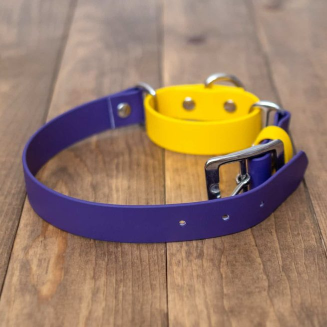 Adventure Martingale Collar in Purple and Yellow