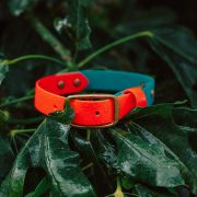 Waterproof Orange and Turquoise Biothane Dog Collar Brass in the leaves