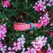 Waterproof Pink Biothane Dog Collar Brass in pink flowers