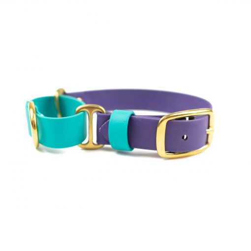 Teal and purple dog martingale collar