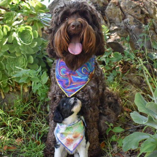 Labradoodles wearing rainbow dog bandanas
