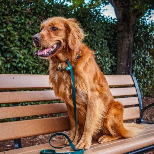 Golden retriever green biothane slip dog leash
