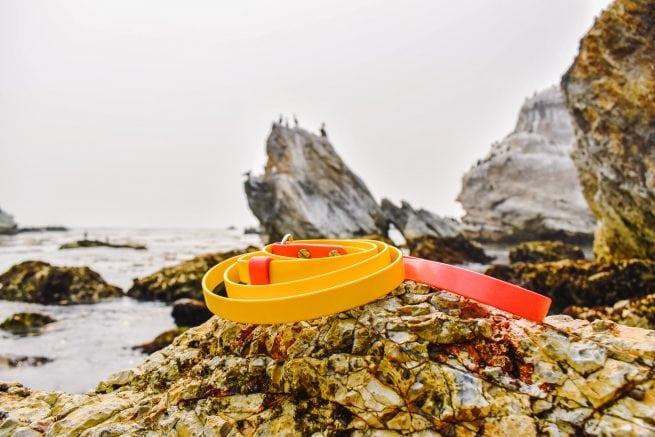 yellow and pink biothane slip dog leash slip lead at ocean waterproof