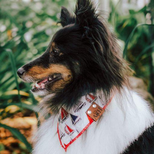 Sail Boat dog bandana on a sheltie