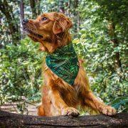Palm tree dog bandana on a golden retriever