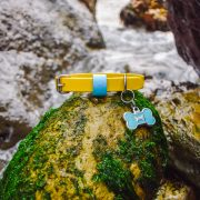 """Yellow and blue 5/8"""" Adventure Dog Collar in water"""