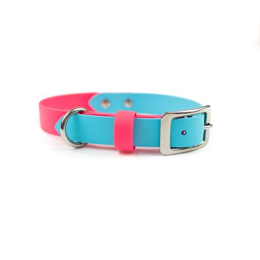 teal and hot pink and stainless steel adventure dog collar