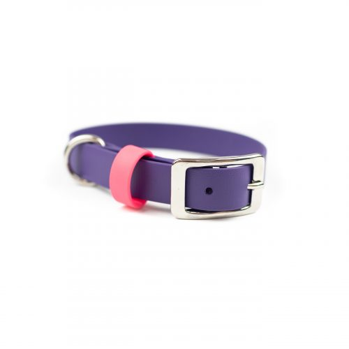 purple adventure dog collar with pink keeper